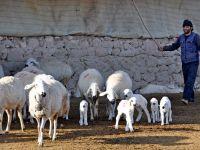 Aksaraylı çobanların evlilik isyanı