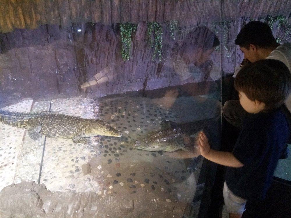 Üsküdar'daki Bu Timsahlar Günde 50 Kilo Tavuk Yiyor