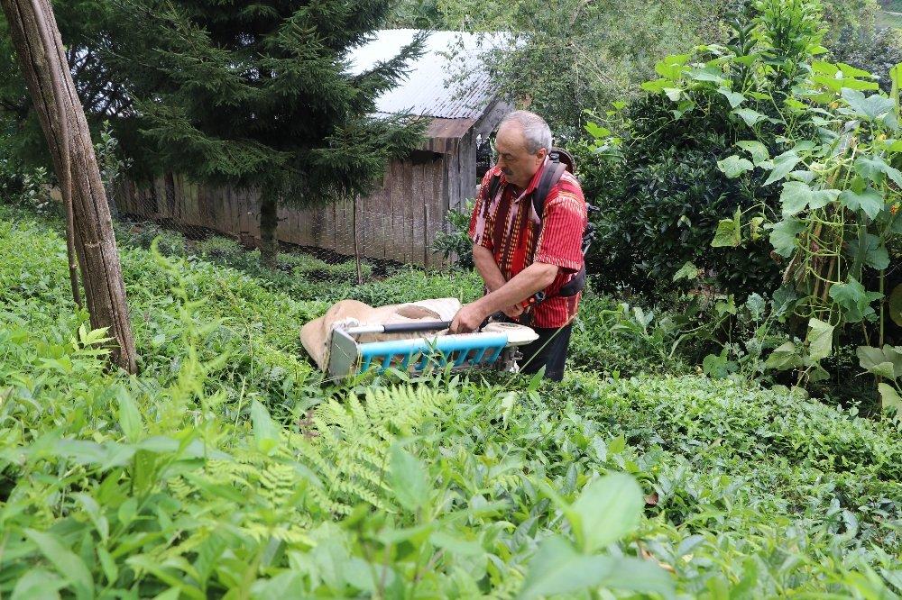 Geliştirdiği Makineyle Günde 1 Ton Çay Topluyor