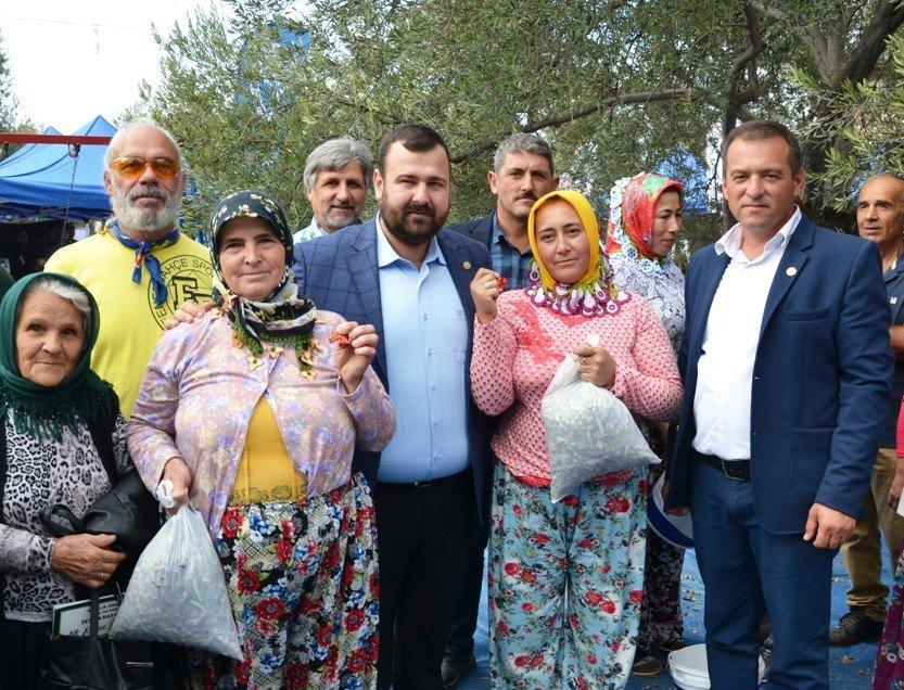 Zeytin Toplayıcıları 'Altın' İçin Yarıştı