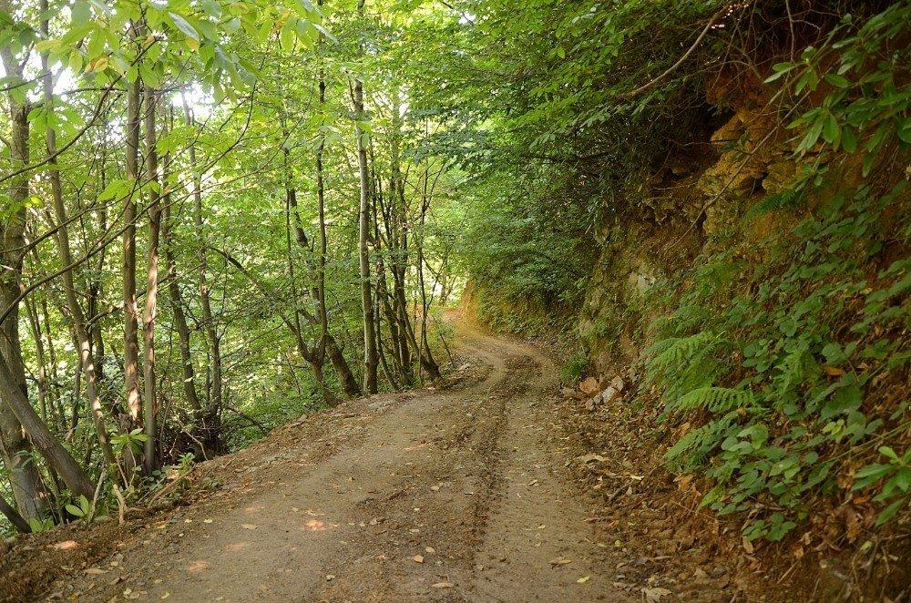 Türkiye'nin İlk Ekoturizm Alanı Kartepe'de