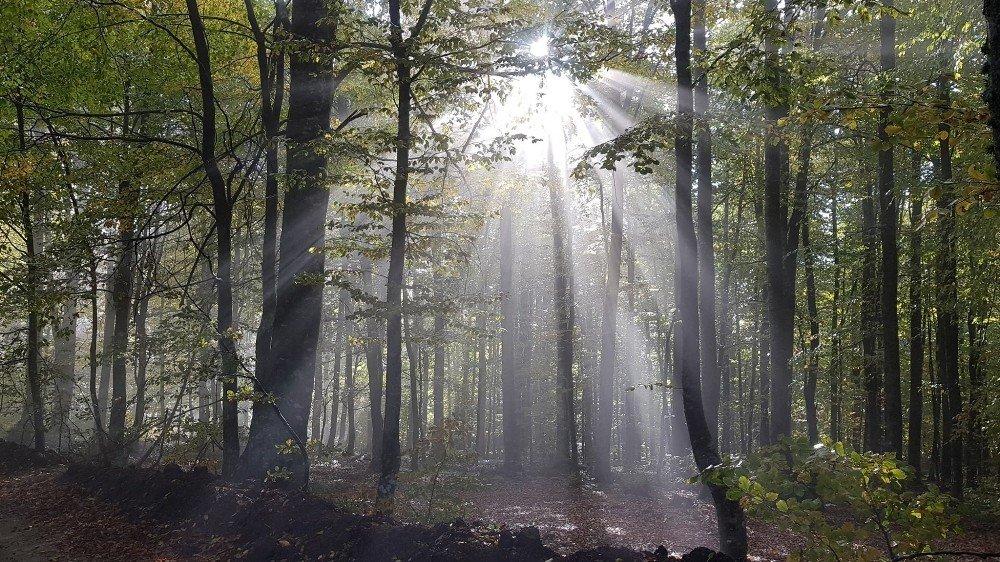 Bursalı Dağcılar Domaniç Ormanları'nda