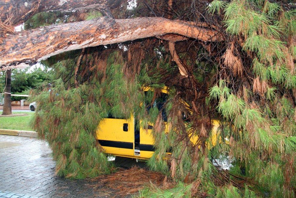 Yağmura Dayanamayan Dev Ağaç Taksinin Üzerine Devrildi