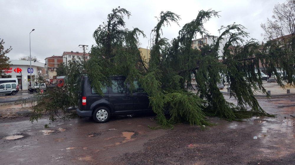 Ağaç Seyir Halindeki Aracın Üzerine Devrildi