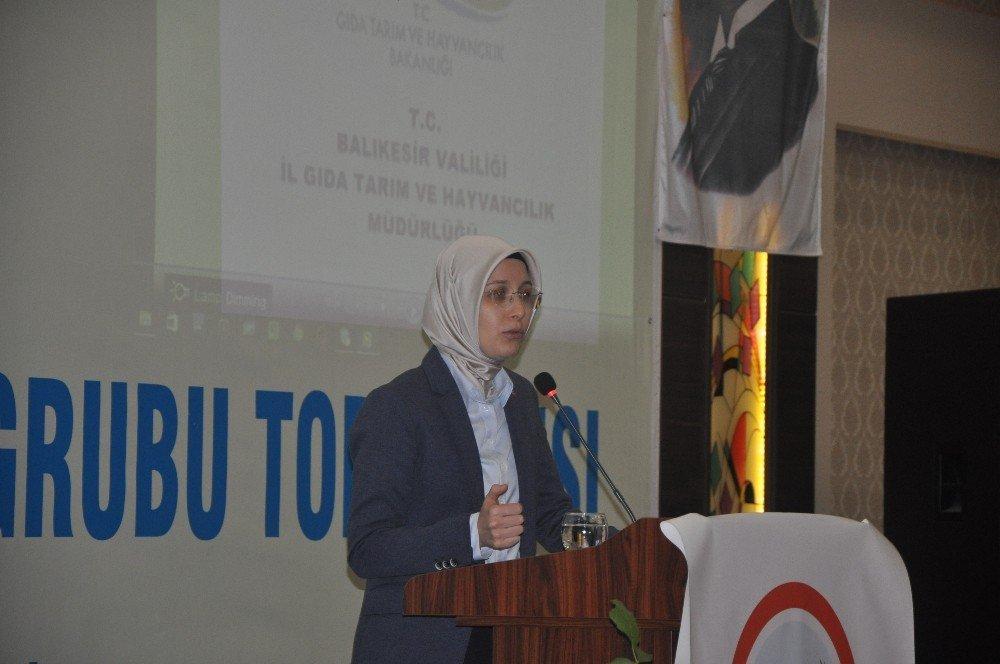 Türkiye 15 Milyon Ceviz Ağacından 200 Bin Tonu Aşkın Ceviz Elde Ediyor