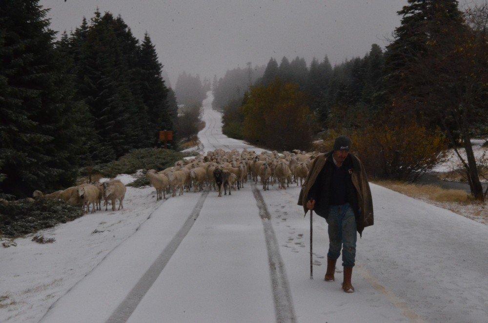 Uludağ'a Kar Yağdı, Koyunların Zirve Kampı Erken Bitti