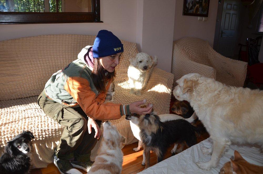 Evinde Onlarca Kedi Ve Köpekle Birlikte Yaşıyor