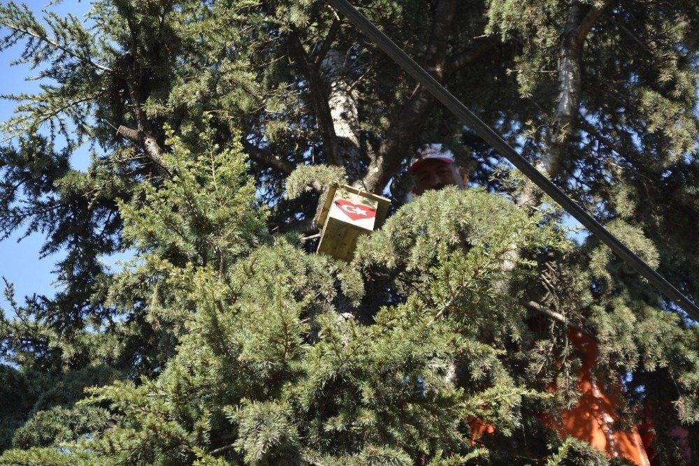 Körfez'de Öğrenciler Ağaçlara Kuş Yuvası Koydu