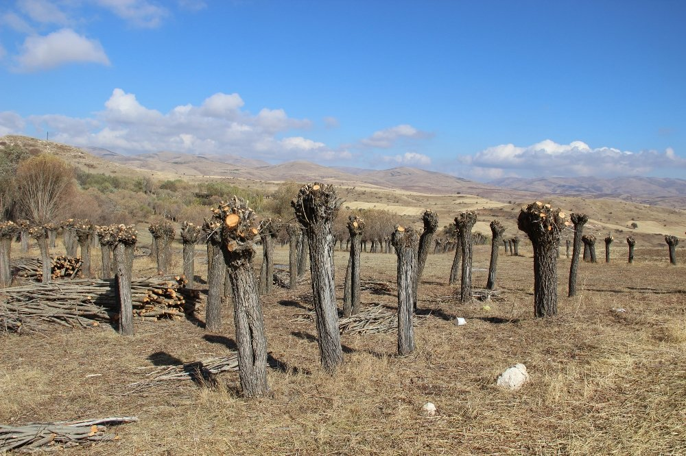 Orman Dalsız, Yapraksız Kaldı