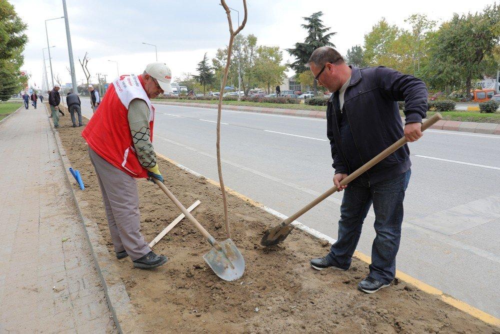 Talatpaşa Caddesine Oya Ağacı Fidanı