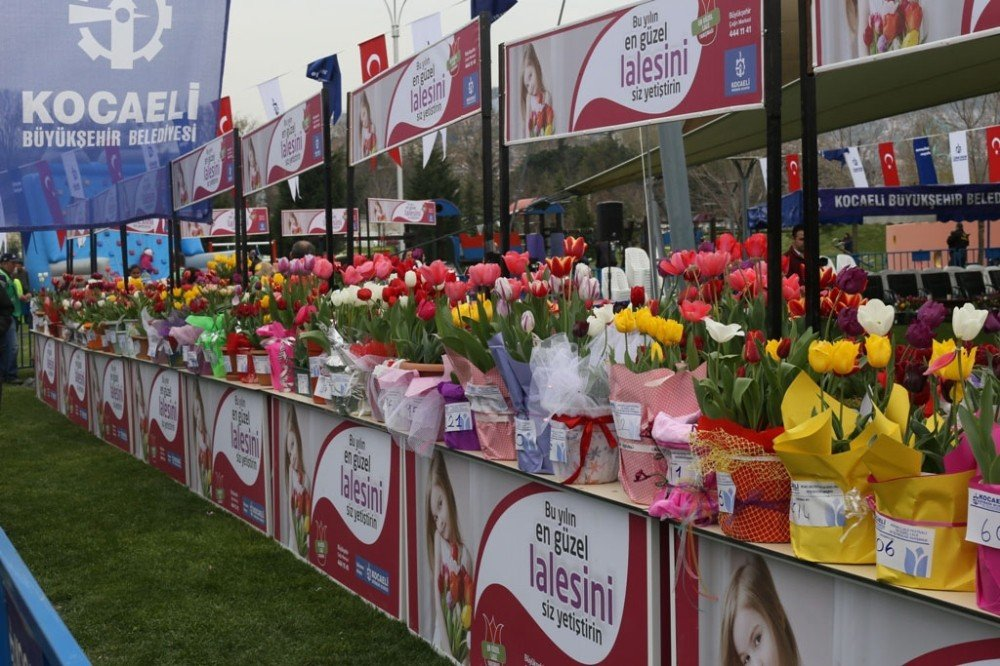 Lale Festivaline İlk Adım, Lale Soğanları Satışa Çıkıyor