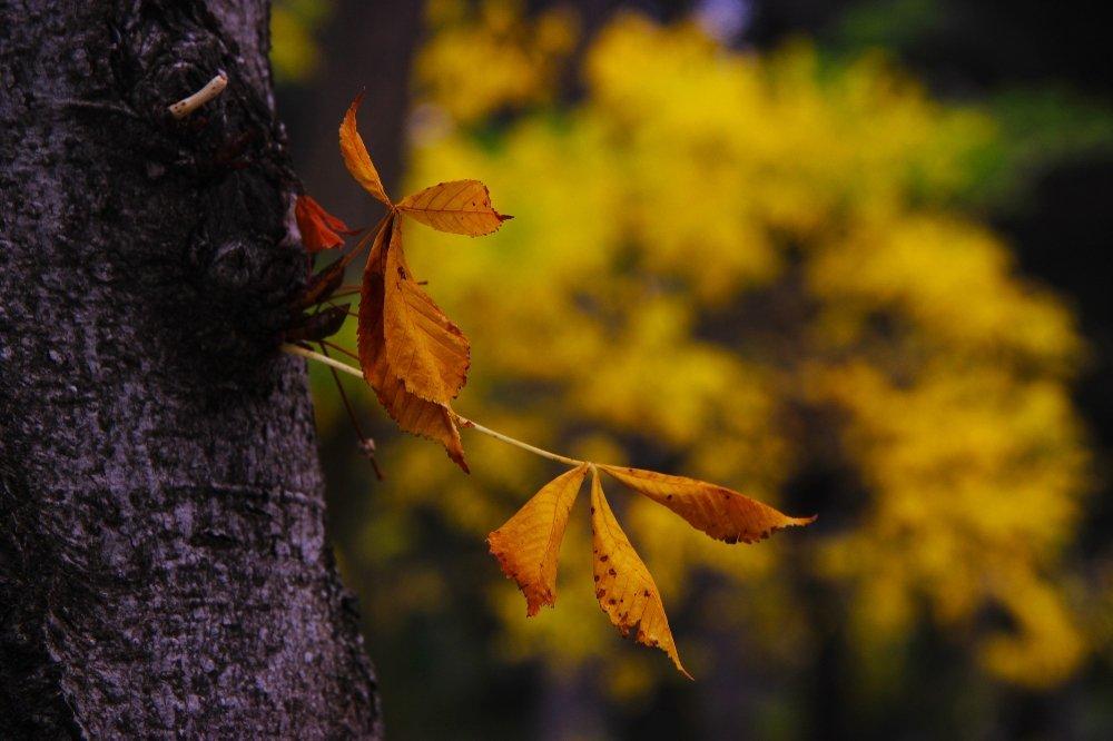 Sonbaharın Renkleri Büyülüyor