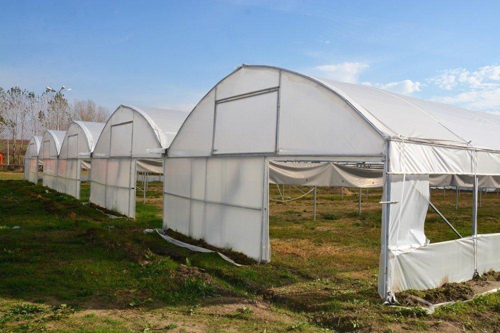 Süleymanpaşa Belediyesi Kendi Çiçeğini Üretecek