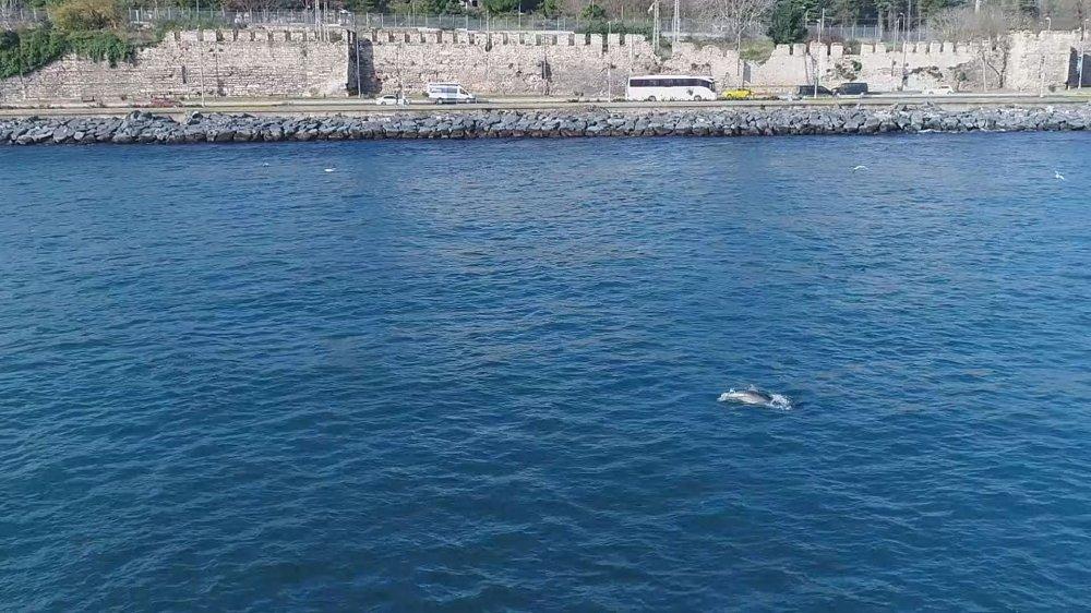 Yunusların İstanbul Boğazı'nda Av Mücadelesi