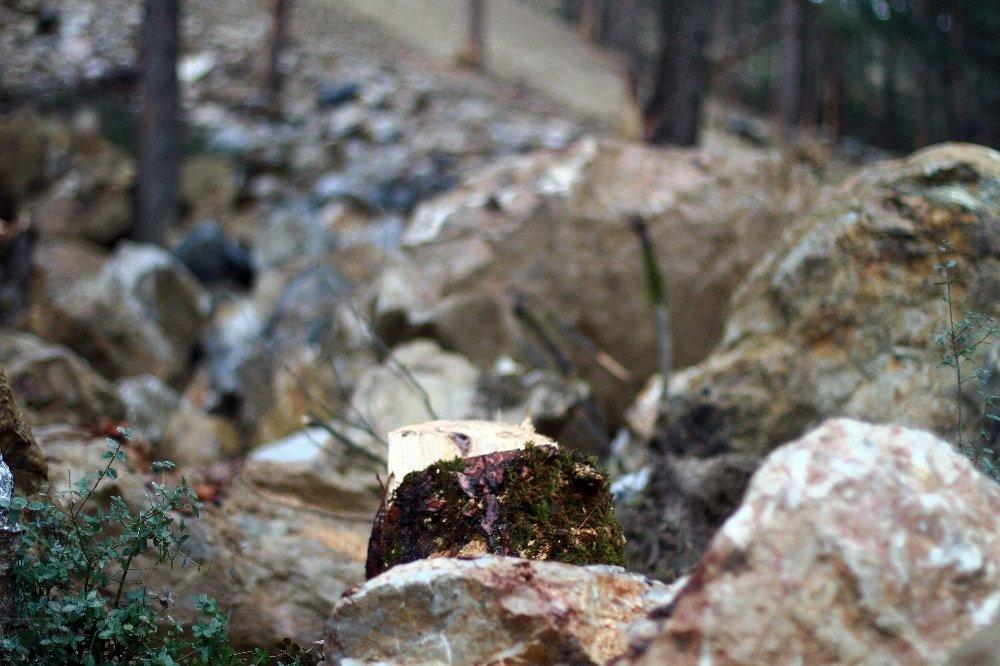 Moloz Ve Kayalar Onlarca Ağacı Yerle Bir Etti