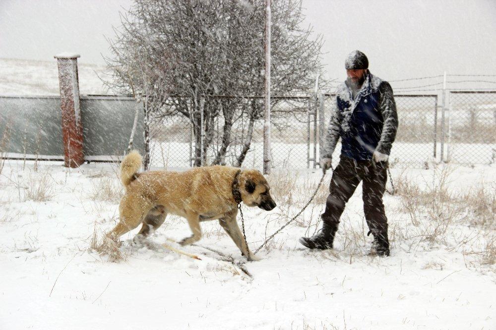 Kangal Köpeği Rus Devlet Televizyonunda