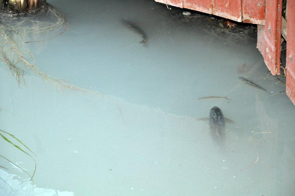 Ceyhan Nehri'nde Toplu Balık Ölümleri
