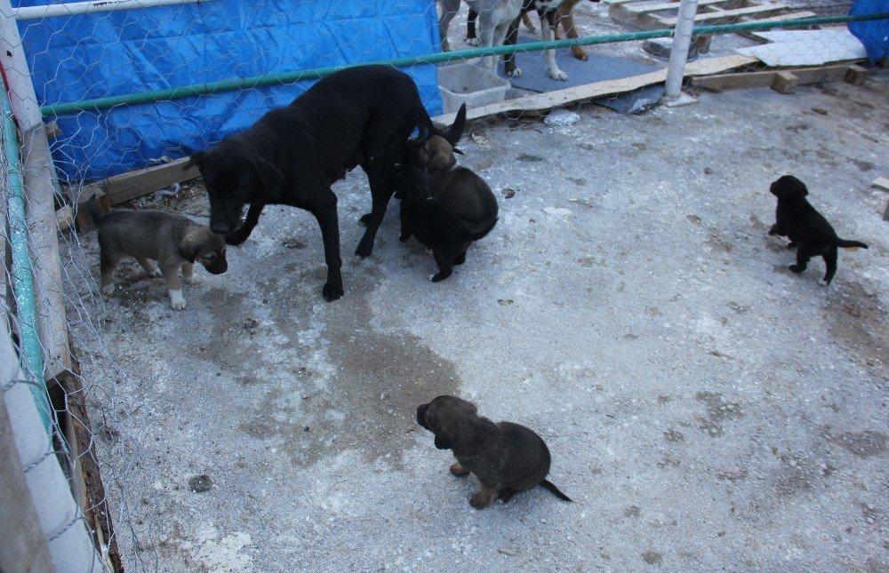Kurban pazarı yerini sokak hayvanlarına bıraktı