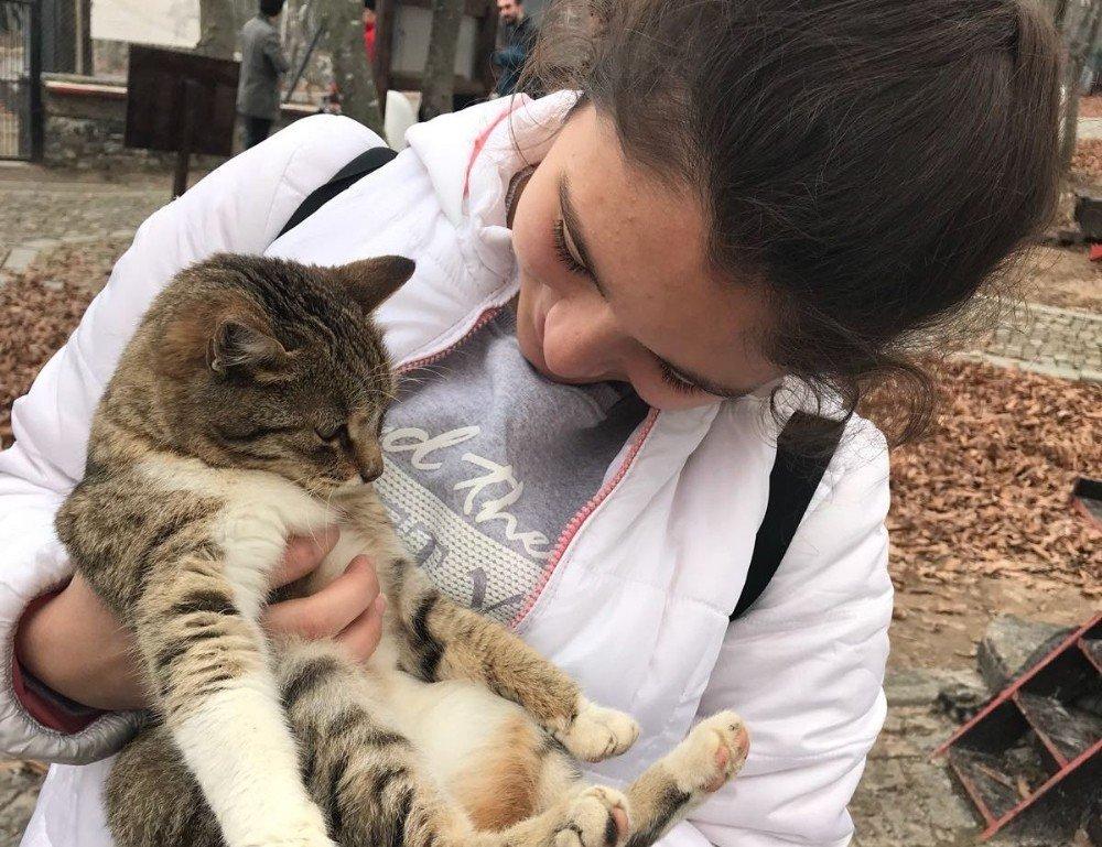 Öğrenciler Kedi Kasabası'nı gezdi