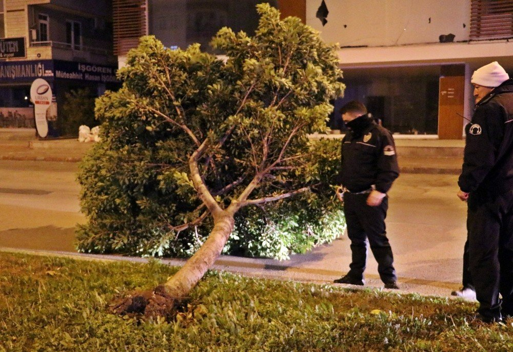 Antalya'da şiddetli rüzgar ağaçları kökünden söktü