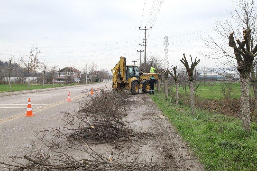 Başiskele'de ağaç budama çalışmaları devam ediyor