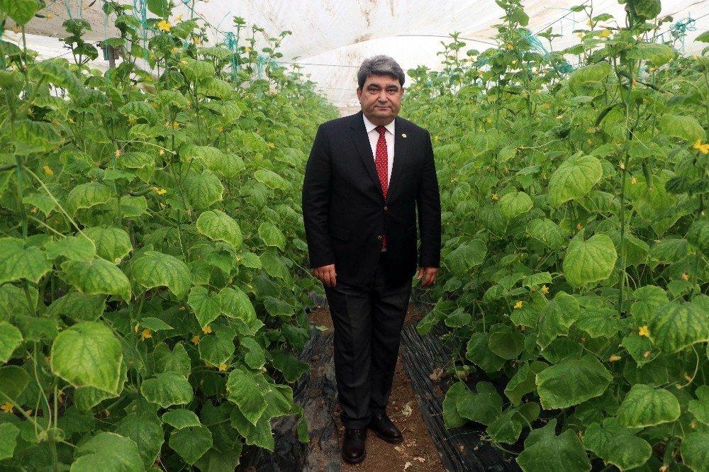 Zam şampiyonu salatalık Mersin'de 1 lira İstanbul'da 8 lira