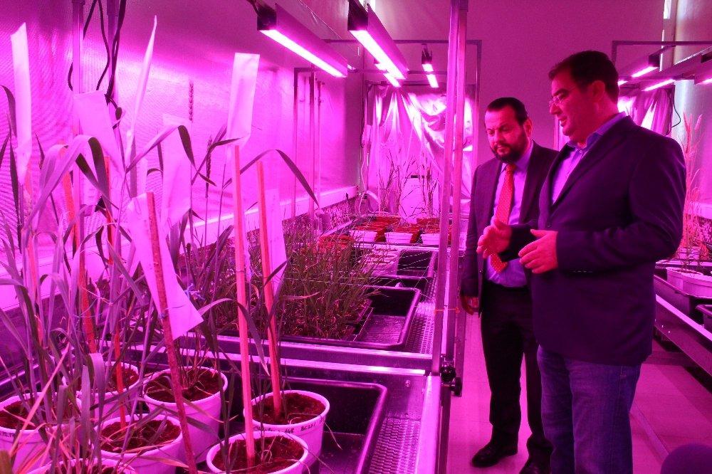Türkiye'de ilk hızlı bitki ıslahı hayata geçirildi
