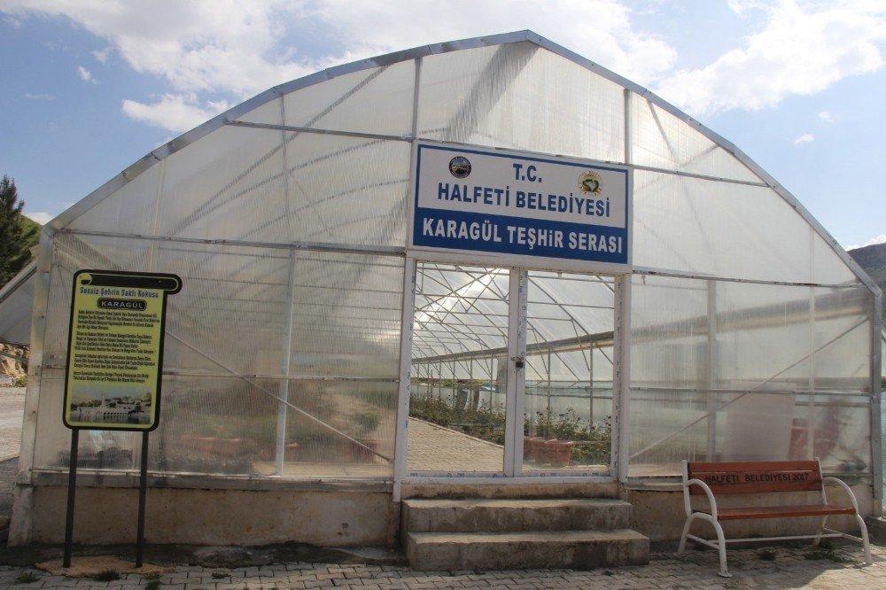 Halfeti'de Karagül Zamanı
