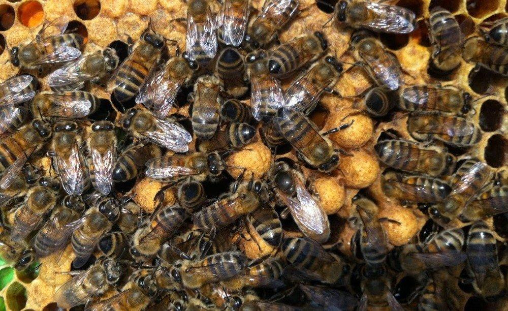 Ulaştırma Bakanlığı'ndan Arılara Geçiş Üstünlüğü Getirildi