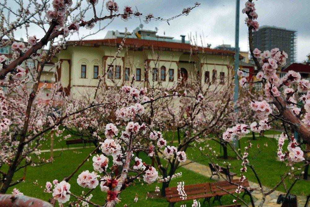 Bağcılarlılar, Baharı Nostalji Bahçelerinde Karşılıyor