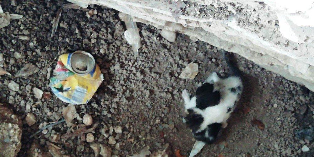 Sarnıca Düşen Yavru Kedileri İtfaiye Kurtardı