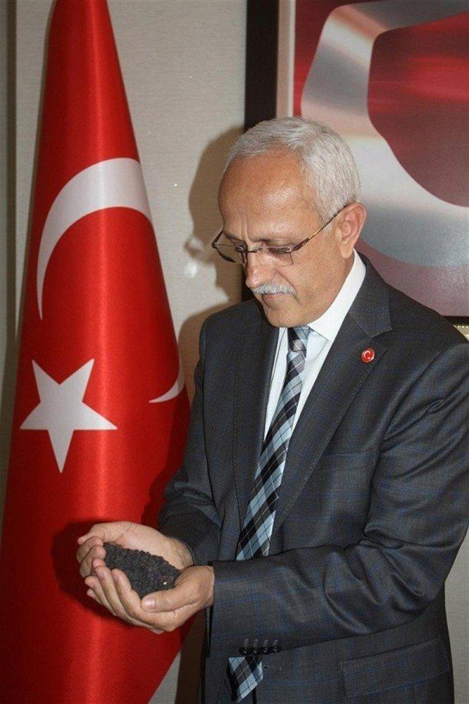 Yozgat'ta Siyah Nohut Ekimi Yapıldı