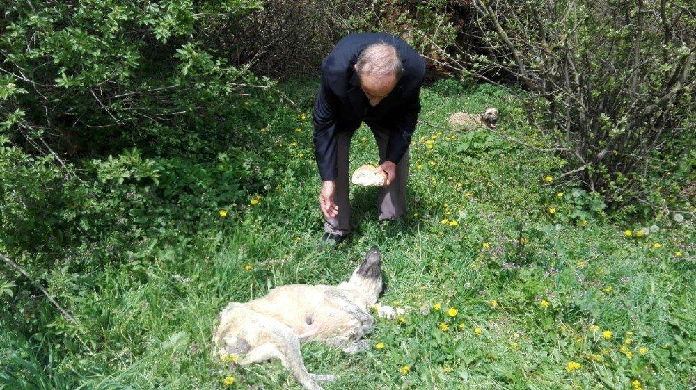 Açlıktan Ölmek Üzere Bulunan Köpeğe Köylüler Sahip Çıktı