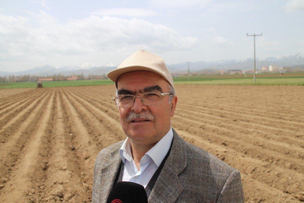 Patatesin Fiyatı 1,5 Liraya Kadar Düşer