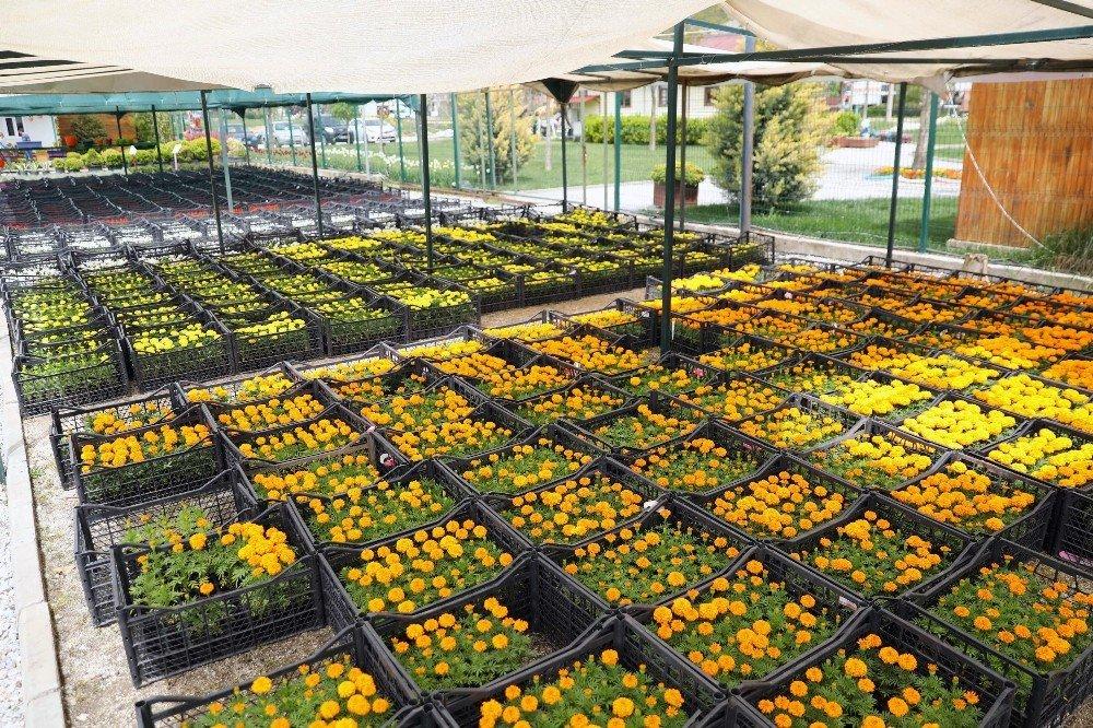 Menteşe Belediyesi'nin Çiçek Bahçesi Rengarenk