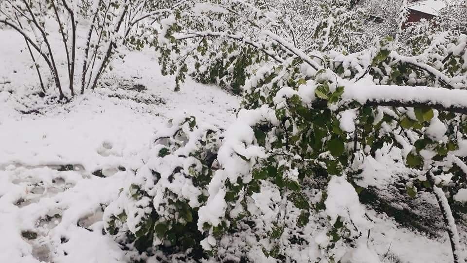 """Soydan: """"Kar Yağışlarının Fındığa Zararı Olmadı, Üreticilerimiz Tedirgin Olmasın"""""""