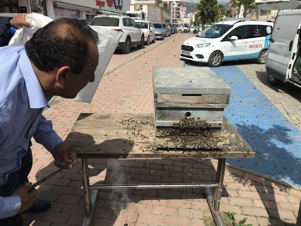 Oğul Veren Kovandan Kaçan Arılar İlçe Merkezini Mesken Tuttu, Görenler Kaçtı