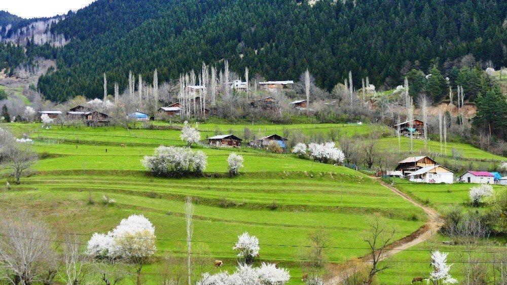 'Sakin Şehir' Şavşat'ta İlkbahar Bir Başka Güzel