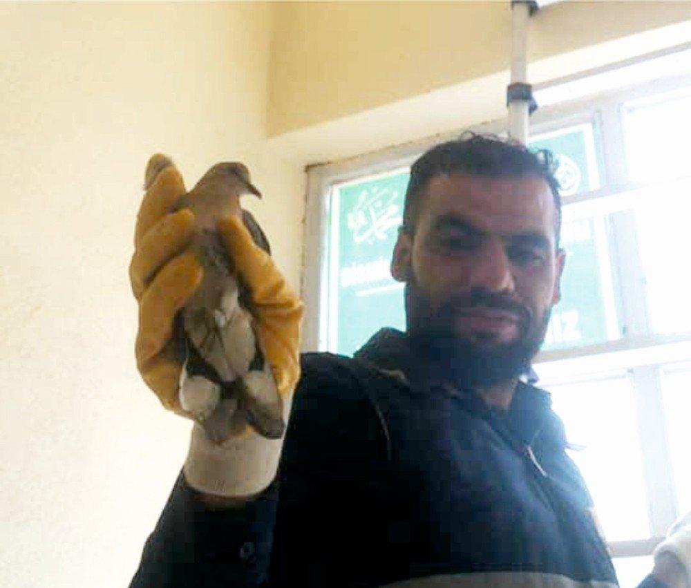 Bina Girişinde Mahsur Kalan Kuş İtfaiye Eri Tarafından Kurtarıldı