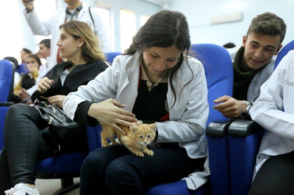Büyükşehir'den Hayvan Sevgisi Ve Bakımı Semineri
