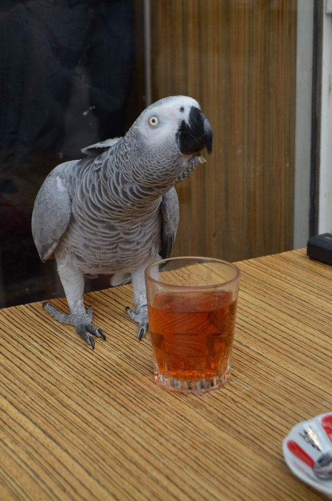 Bu Papağan Çay Tiryakisi