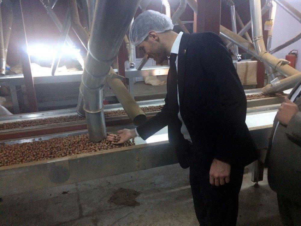 Başkan Karagöl, Fındık Üreticilerinin Sorunlarının Çözümü İçin Temaslarda Bulundu