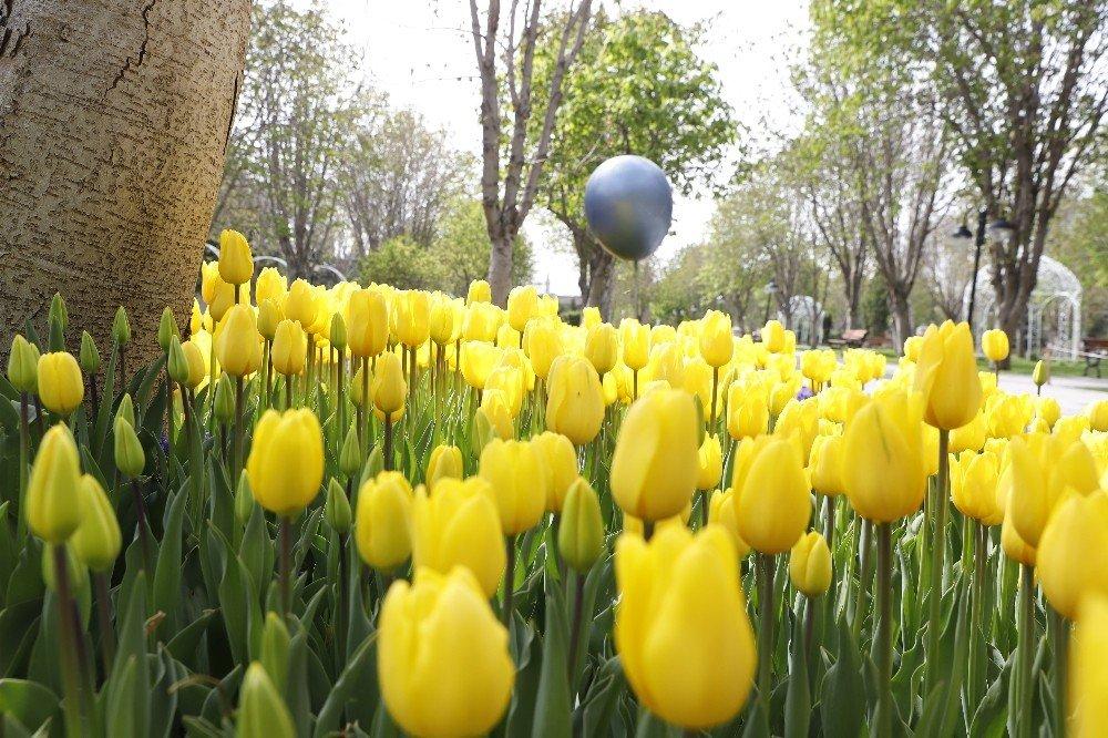 Kayseri'de Caddeler Çiçek Açtı