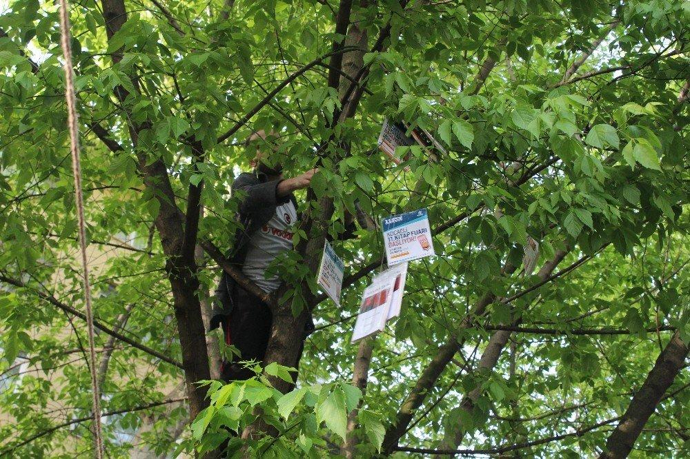 Ağaçlara Asılan Kitapları Toplamak İçin Kıyasıya Yarış