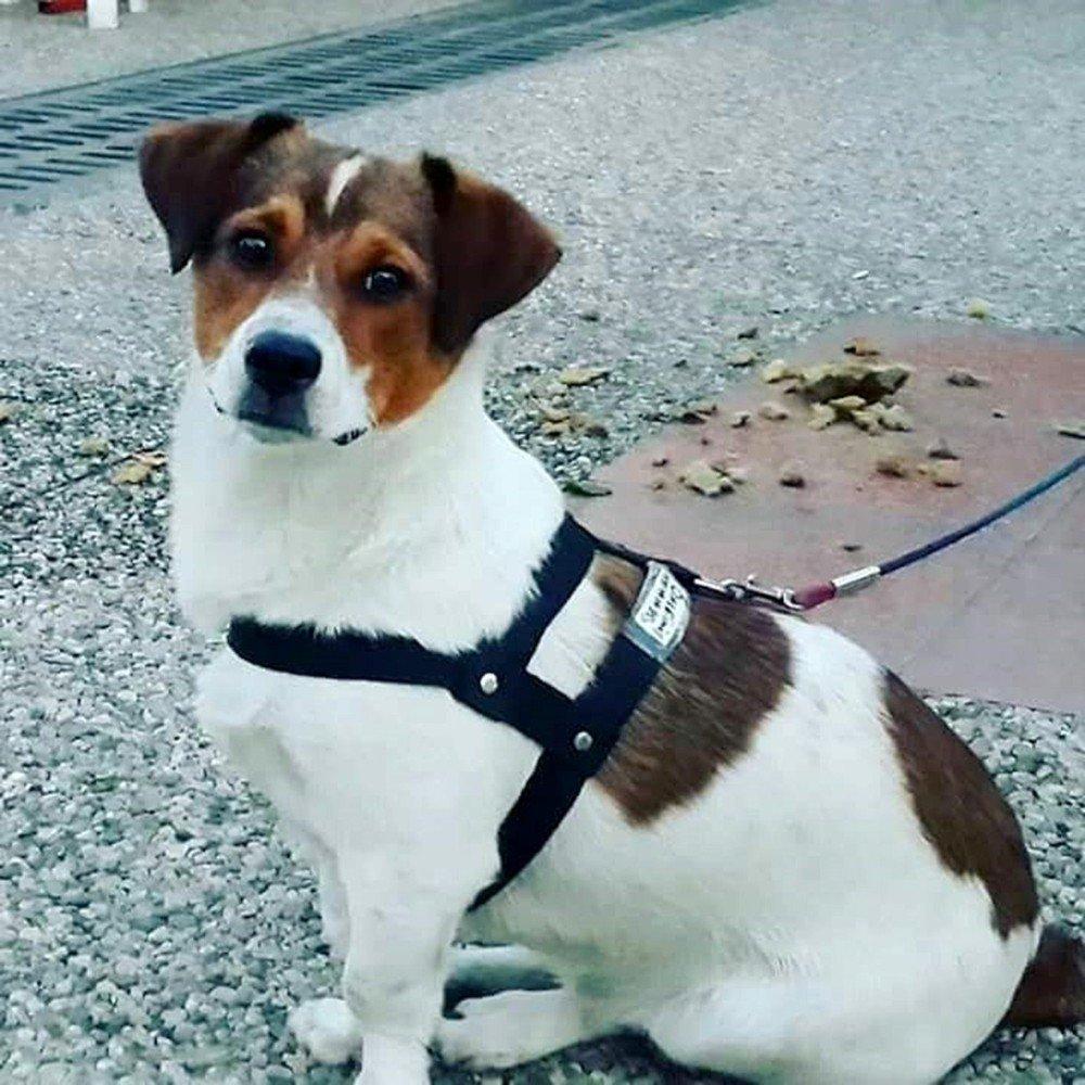 Barınak Görevlilerinin Sahipli Köpeği Öldürdüğü İddiası