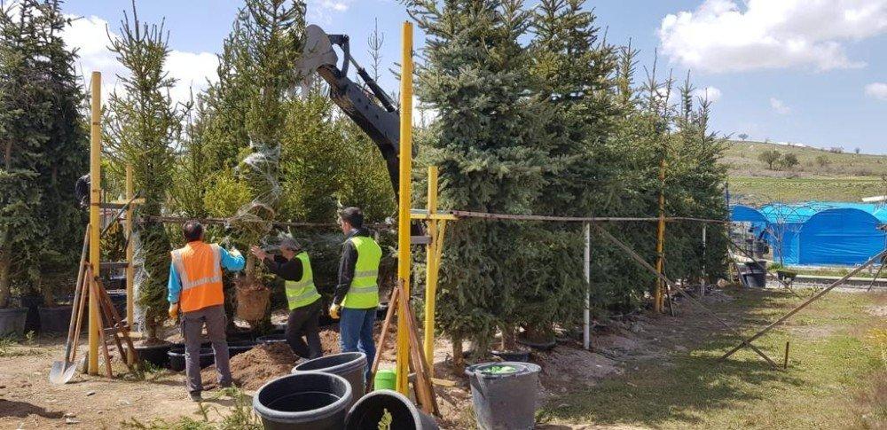 Nevşehir'deki 110 Bin Kişi İçin 110 Bin Ağaç Dikilecek