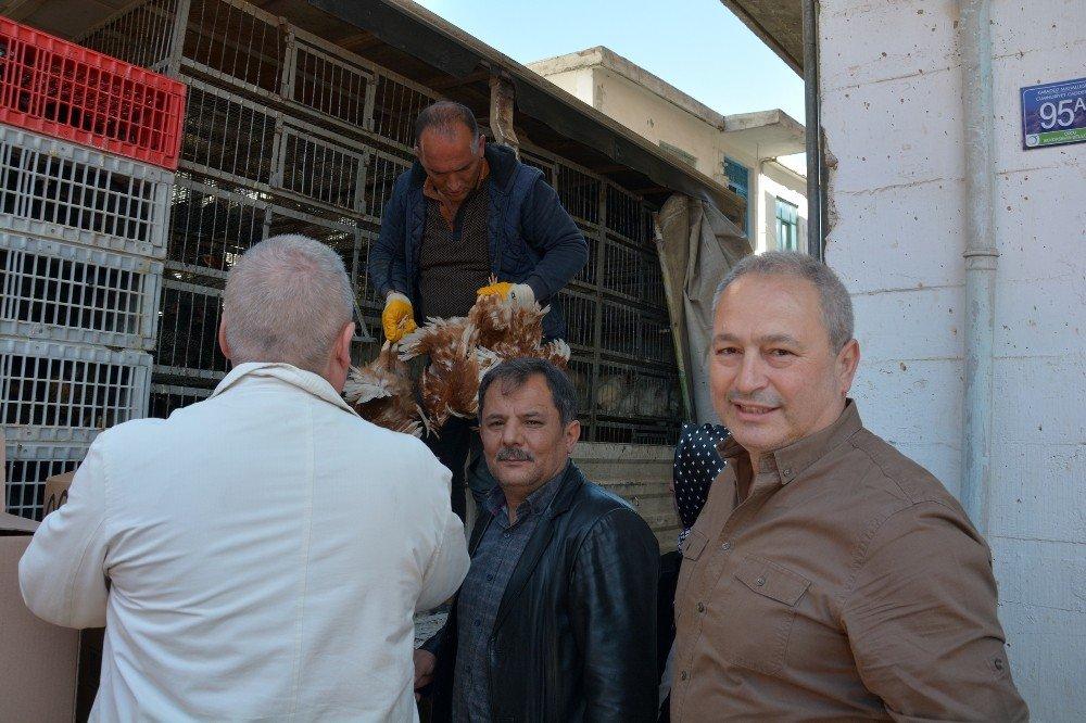 Bin 200 Yumurta Tavuğu Çiftçilere Dağıtıldı