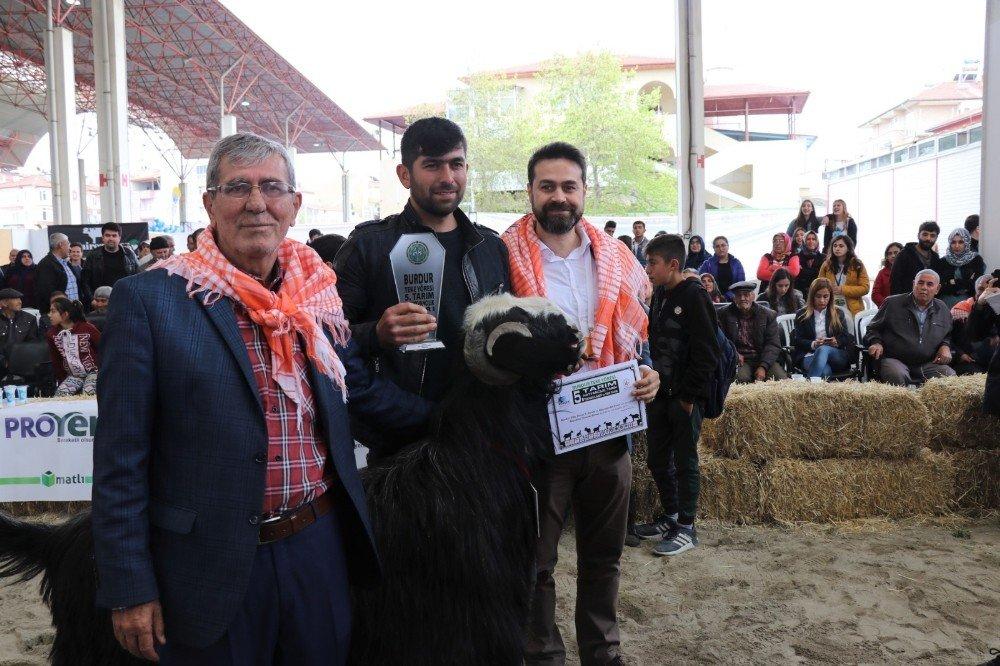 Burdur'da Defile Gibi Hayvan Güzellik Yarışması