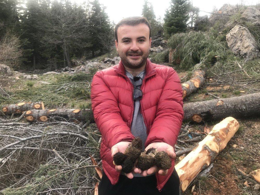 Kuzugöbeği Mantarının Kilosu 100 Liradan Satılıyor