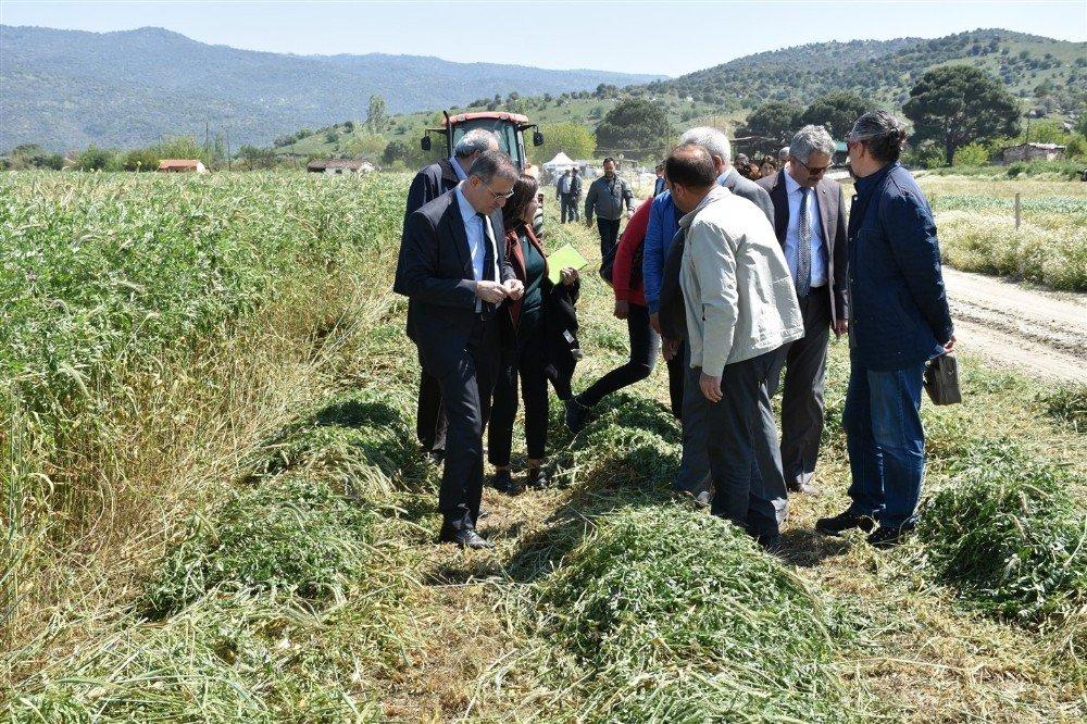 Aydın'da 596 Ton Yem Bitkisi Tohumu Dağıtıldı